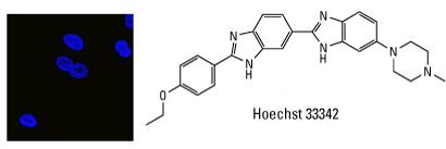 Hoechst-Structure-300px
