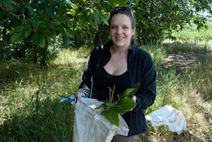 Medical thnobotanist Cassandra Quave collecting plant specimens in Italy.